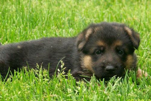 nettie-puppy-for-web-21